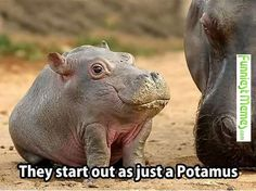FunniestMemes.com • They Start Out As Just A Potamus