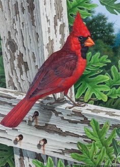 Bird Painting Acrylic, Watercolor Bird, Rock Painting, Bird Pictures, Pictures To Paint, Painting Pictures, Exotic Birds, Colorful Birds, Bird Drawings
