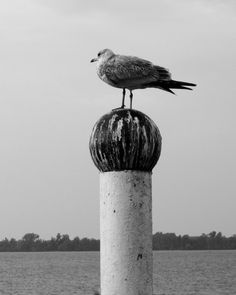 I love B & W photos. I took this one last summer in Erie at the dock.