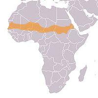 Memento Mori!: El inesperado retroceso del desierto: Greening Sahel