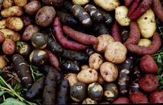 papas chilotas Fotos - Palafito 1326 - Castro - Chile Chilean Food, Chilean Recipes, Peru, Vegetables, Italian Cafe, Stilt House, Luxury Hotels, Beverages, So Done