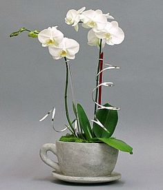 Repotting Orchids Made Easy ( love the mug idea for a will in the kitchen)