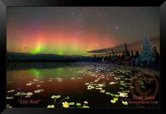 Lily Red, aurora borealis photo from Alaska