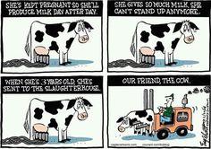 #cow #dairy #milk #exploitation #injustice #speciesism #veganism