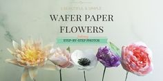 Wafer Paper Flowers Tutorial