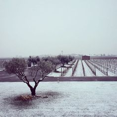 #Fantinel #winery #winter #vineyards #snow #magic #letitsnow #view #landscape #fvg #spilimbergo #snowflakes #wine #winecountry #winetime #italianwine #lifestyle #harmony #perfection #white #nature #madeinitaly