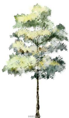 水彩风格的手绘树5