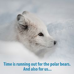 Save The Arctic, Ages Of Man, Top Of The World, Time Capsule, Polar Bear, February 11, North Pole, Animals, Plant