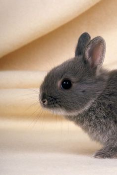 I WANT THIS RABBIT!!!!!!!!!!!