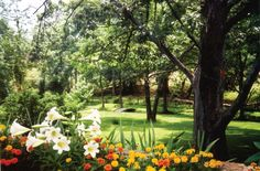 Spring Scenery, Plants, Plant, Planets