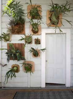 47 Relaxing Decorations Ideas With Staghorn Fern That Will Inspire You - Fern plants provide a handsome decoration for indoors or outdoors. There are many types of ferns available which can be grown in containers indoors, s. Air Plants, Potted Plants, Garden Plants, Indoor Plants, Indoor Garden, Outdoor Gardens, Vignette Design, Staghorn Fern, Flora Grubb