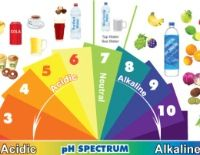 Alkaline & Acidic Foods Chart: The pH Spectrum. Moving to the Alkaline world for digestion health. Acidic Food Chart, Acidic Foods, Acid And Alkaline, Alkaline Diet, Health And Nutrition, Health And Wellness, Nutrition Chart, Healthy Tips, How To Stay Healthy