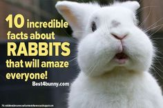 10 incredible facts about rabbits that will amaze everyone! Read them here... http://best4bunny.com/10-incredible-facts-rabbits-will-amaze-everyone/