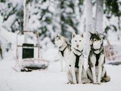 Finnish Lapland is as close as reality gets to those who dream of a winter wonderland and contrasts are a key factor in the allure of Lapland. Dark Winter, Winter Snow, Pet Dogs, Dog Cat, Lapland Finland, Peaceful Places, Winter Scenes, Pet Birds, Winter Wonderland