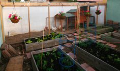 This is our organic veggie garden, and our fully enclosed chicken run and chicken coop.  The raised beds are made of cedar, and have lasted for eight years.  My husband made everything you see, including the potting bench on the right.  Everything except the chicken coop!