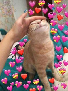 Funny cute memes, bad memes, funny love, be like meme, crazy cat Funny Cute Memes, Cute Love Memes, Funny Animal Memes, Funny Cats, Bad Memes, Cute Baby Animals, Cute Funny Animals, Cute Cats, Cute Cat Wallpaper