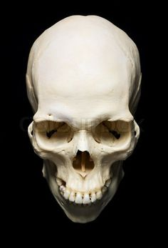 Stock image of 'white real Skull with black background'