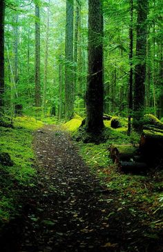 Forest Path. would be such a beautiful run!