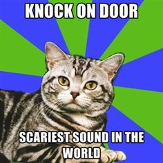 Introvert Cat - Knock on door Scariest sound in the world