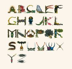 Insects Alphabet by Paula Duță  (Paper and color pencils)