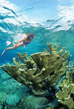 Surrounding the island of Bonaire, the Bonaire Marine Park offers the best snorkeling just a quick swim from the shoreline.