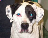 PETITION ~~ NEW!! Started in Aug, 2012 Stop the Dog Torture and Murder at Wayne State University!