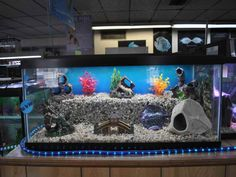 I Like The Diffe Levels In This Aquarium Cool Fish Tank Decorations