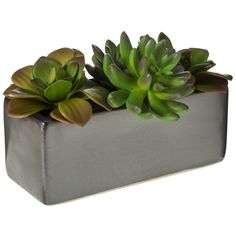 Threshold Faux Succulents in Black Ceramic Planter ($15) ❤ liked on Polyvore featuring home, home decor, floral decor, artificial flowers, black fake flowers, tree planter, faux trees and black planters