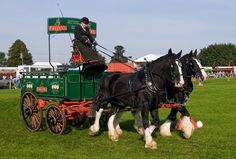 Carriage competition at the Royal Berkshire Show, Newbury