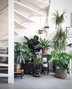 Inspiratieboost: creëer een plantenhoek in huis - Roomed