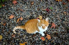 Fall is here Fall Is Here, Cats, Animals, Gatos, Animales, Kitty Cats, Animaux, Cat, Animal