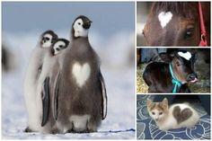 10 Animali dal cuore peloso [FOTO]
