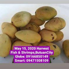 Catering, Harvest, Shrimp, Globe, Mango, Delivery, Restaurant, Fish, Vegetables
