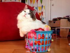 {kitty in a wee basket} classic.