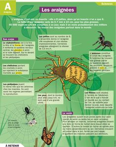 Educational infographic : Fiche exposés : les araignées Language Study, French Language, Science Biology, Life Science, Science For Kids, Science And Nature, French Phrases, French Class, Animal Facts