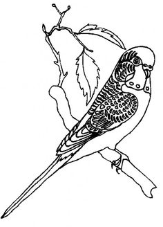 A Bird With Beautiful Fur Coloring Pages