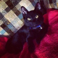 My pretty boy #black #cat # kitten #kitty #babyboy #blackcat #blackkitty #blackkitten #yelloweyes