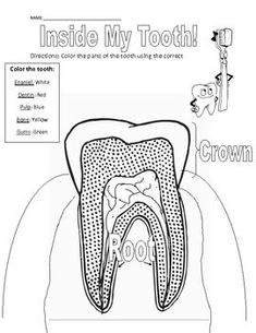 Tooth Anatomy Coloring Page | Anatomy coloring book, Teeth ...