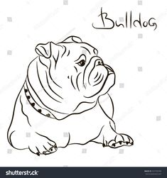 The major breeds of bulldogs are English bulldog, American bulldog, and French bulldog. The bulldog has a broad shoulder which matches with the head. Mini English Bulldogs, English Bulldog Art, British Bulldog, Bulldog Mascot, Bulldog Puppies, Vector Dog, Bulldogge Tattoo, Bulldog Drawing, Bulldog Images