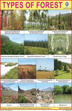 TYPES OF FOREST CHART
