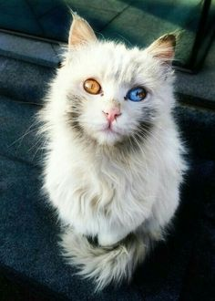 Oh god i love this cat, is fur his eyes (@◇@)