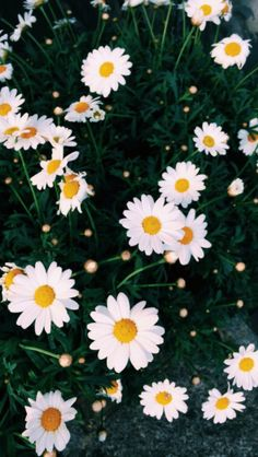 Flowers photography wallpaper backgrounds daisies ideas for 2019 Wallpaper Spring, Frühling Wallpaper, Tumblr Iphone Wallpaper, Trendy Wallpaper, Aesthetic Iphone Wallpaper, Wallpaper Quotes, Aesthetic Wallpapers, Cute Wallpapers, Wallpaper Backgrounds