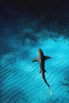 #Serrurier #le_Chesnay http://serrurierlechesnay.lartisanpascher.com/ Shark