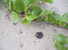 heart sea bean