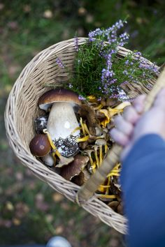 "Mushroom Picking - donal skehan  ""After a couple of hours spent gazing at the forest floor, and some careful identification, we had a basket filled to the brim with golden trumpet shaped chanterelles and giant ceps."""