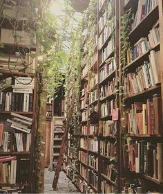 Incredible home library catalog system you'll loveYou can find Dream library and more on our website.Incredible home library catalog system you'll love Room With Plants, Dream Library, Beautiful Library, Home Libraries, Library Home, Library Art, Vintage Library, Vintage Books, Book Aesthetic