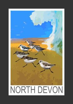 Sanderling on a North Devon surfing beach (Art Print)
