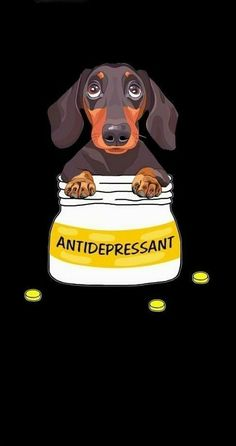 """Exceptional """"dachshund dogs"""" information is readily available on our website. Have a look and you wont be sorry you did. Dachshund Breed, Dachshund Quotes, Arte Dachshund, Funny Dachshund, Mini Dachshund, Daschund, Dapple Dachshund, Weenie Dogs, Chihuahua Dogs"""