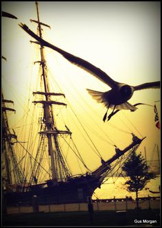 Galveston, Texas | March 14, 2012 | Seagulls and tall ship Elissa