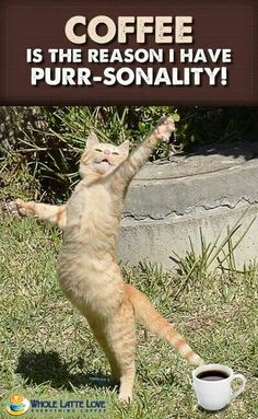 40 All Time Funny Pictures of Dancing Animals Cute Cats, Funny Cats, Funny Animals, Cute Animals, Funniest Animals, Cat Fun, Dancing Animals, Dancing Cat, Crazy Cat Lady